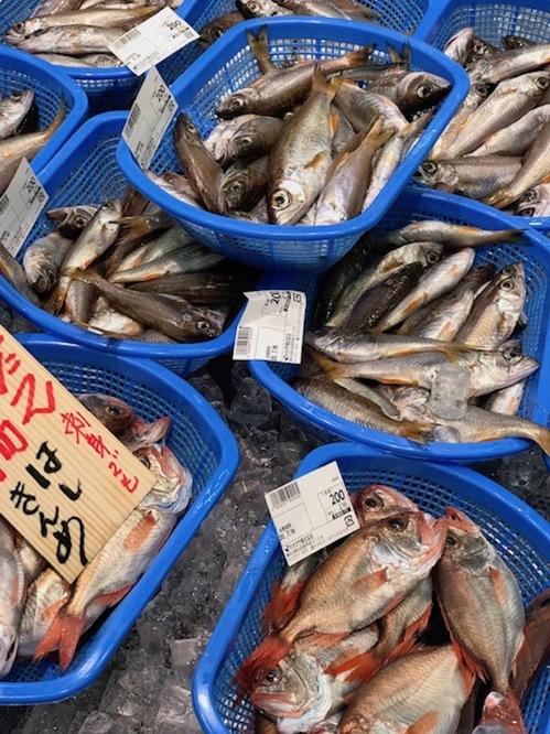 01魚.jpg