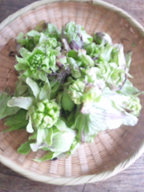 http://hohoho.pupu.jp/daily/images/120413_124058.jpg