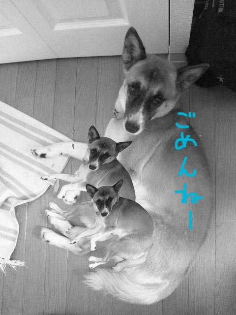 http://hohoho.pupu.jp/daily/images/zu2.jpg