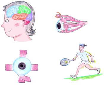眼球1.jpg